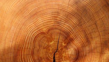 best wood for sauna